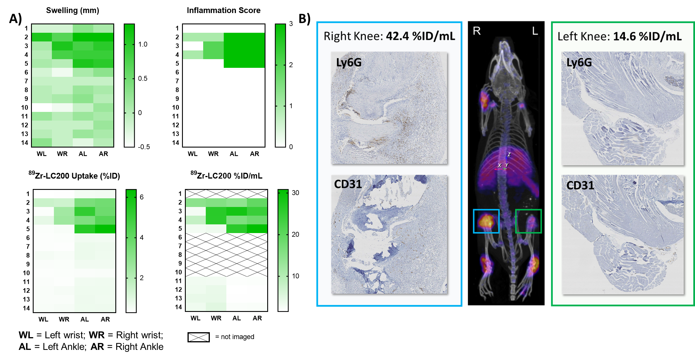 Figure 2   89Zr Zr-LC200 uptake correlates with the degree of inflammation  (A) Heatmaps showing joint swelling 6842c699ec958